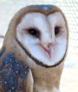 WordPressBarnOwl