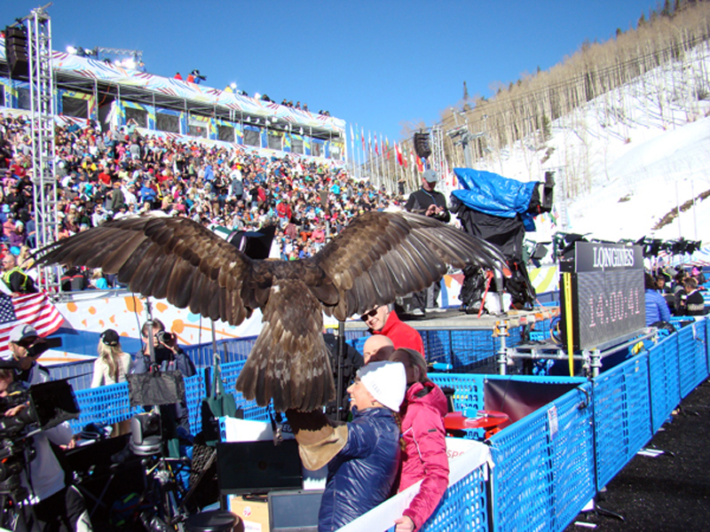 Birds Of Prey Ski Championship Races At Beaver Creek Raptor Education Foundation